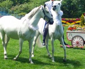 44th-horseshow3