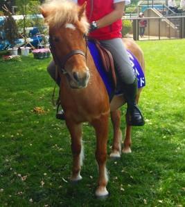 44th-horseshow4