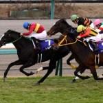 2015-有馬記念