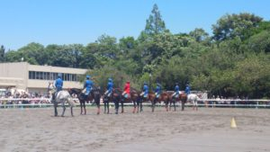 45th-horseshow4